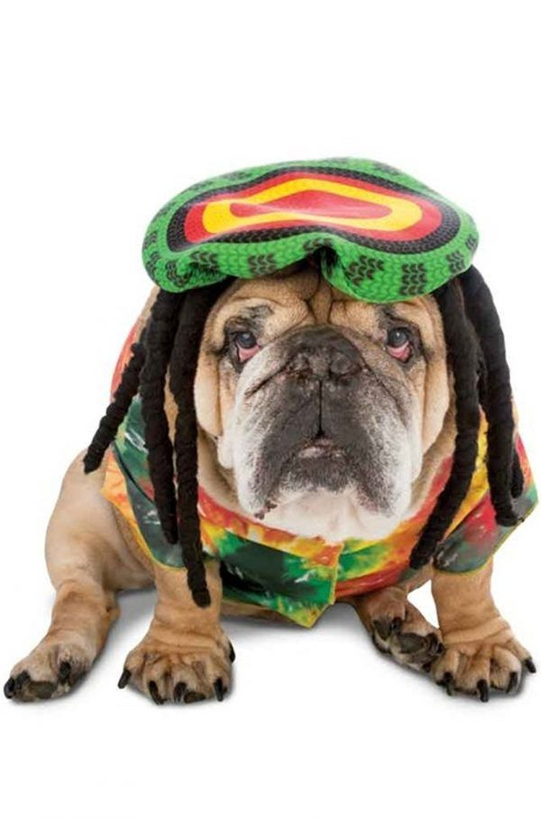 19 Perfect Halloween Dog Costumes With Images Pet Costumes