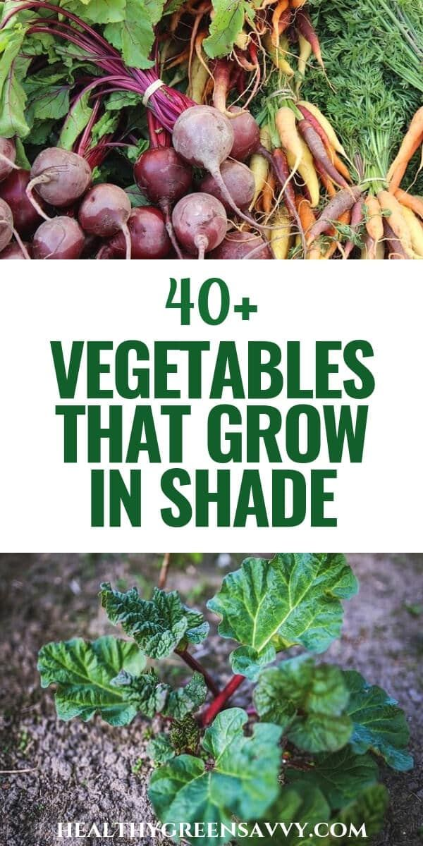 40+ Vegetables that Grow in Shade is part of Vegetable garden tips, Food garden, Shade garden, Farm gardens, Garden landscaping, Veggie garden - If you gave up on growing food because your garden is shady, you'll be pleased to know that there are more than 40 vegetables that grow in shade!