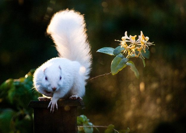 Albino Squirrels Olney Illinois 11 Bizarre Places In The Us That You Need To Know About Road Trip Usa Strange Places Squirrel