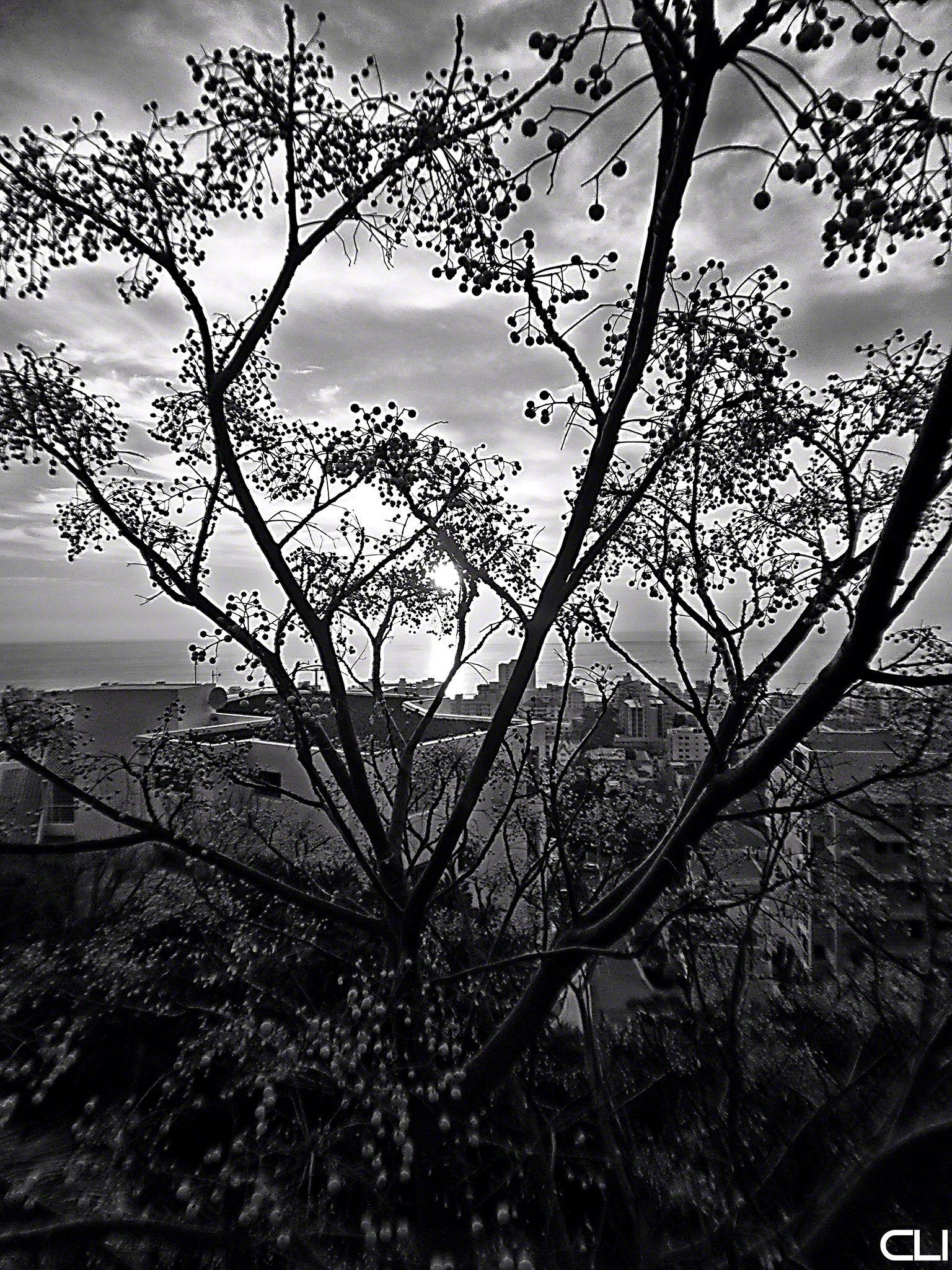 Atlantic Ocean, flats on the hillside, seen through native tree
