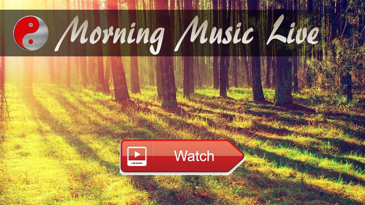 Morning Music Instrumental Relaxing Live Stream Music Playlist