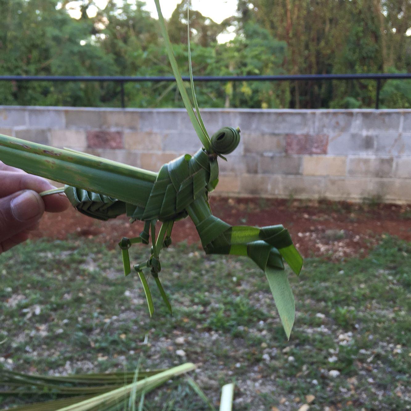 Palm frond pray mantis | Weaving art Palm frond Pandanus ... - photo#45