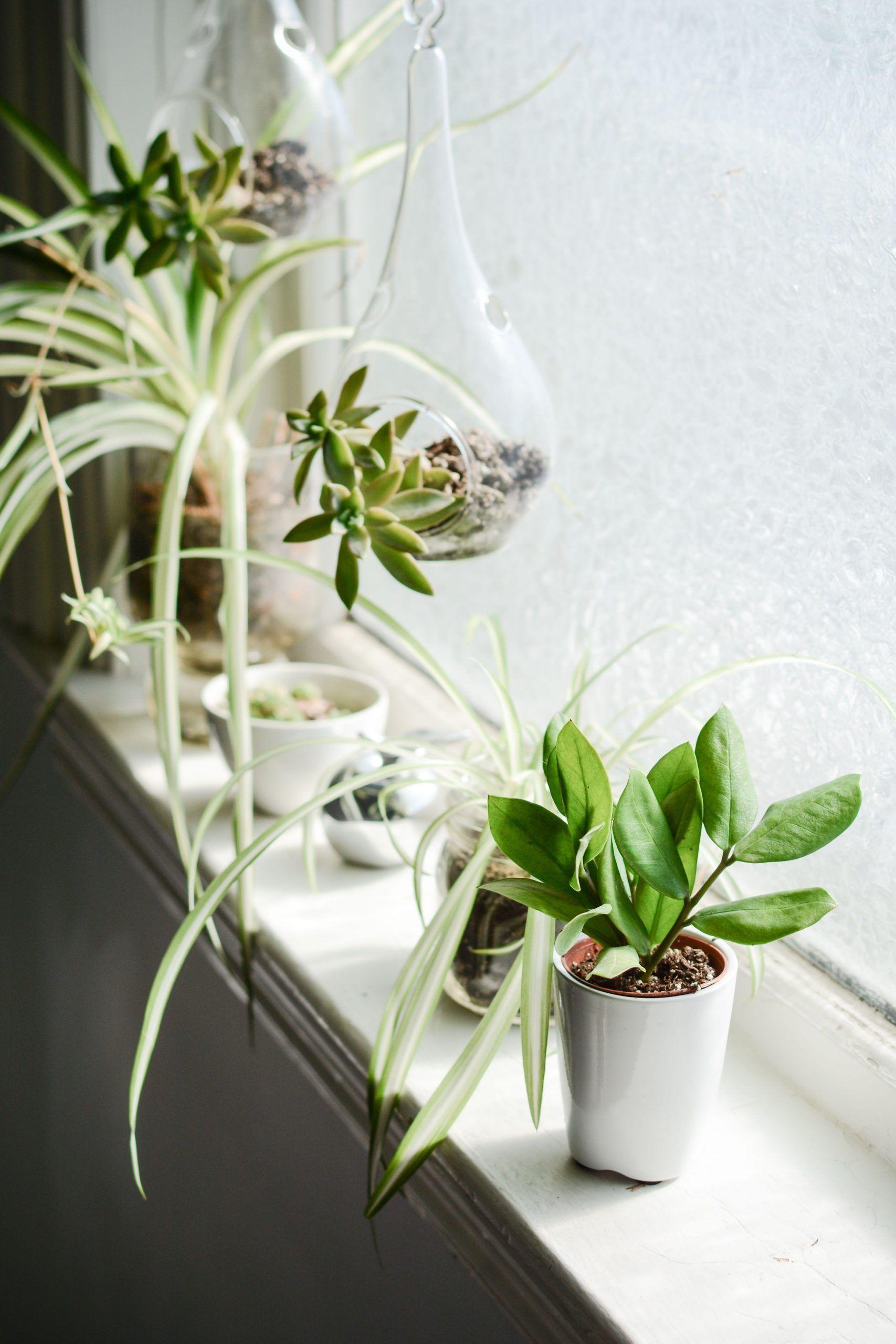 spider plant succulents indoor hanging terrarium ...