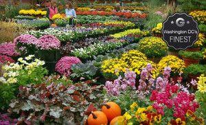 Merrifield Garden Center Merrifield Gardens Landscape Services