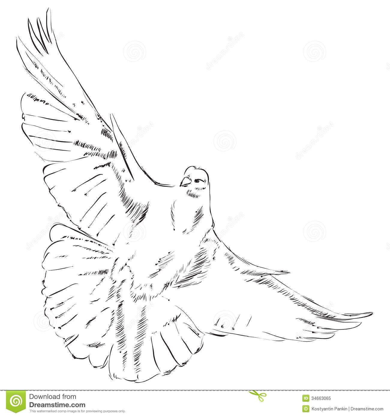 flying dove pencil drawing - photo #24