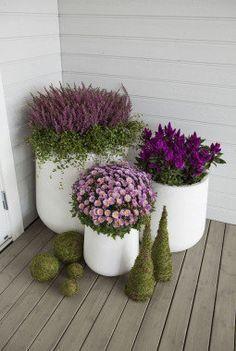 Photo of Blomstene holderen seg vakre hele høsten
