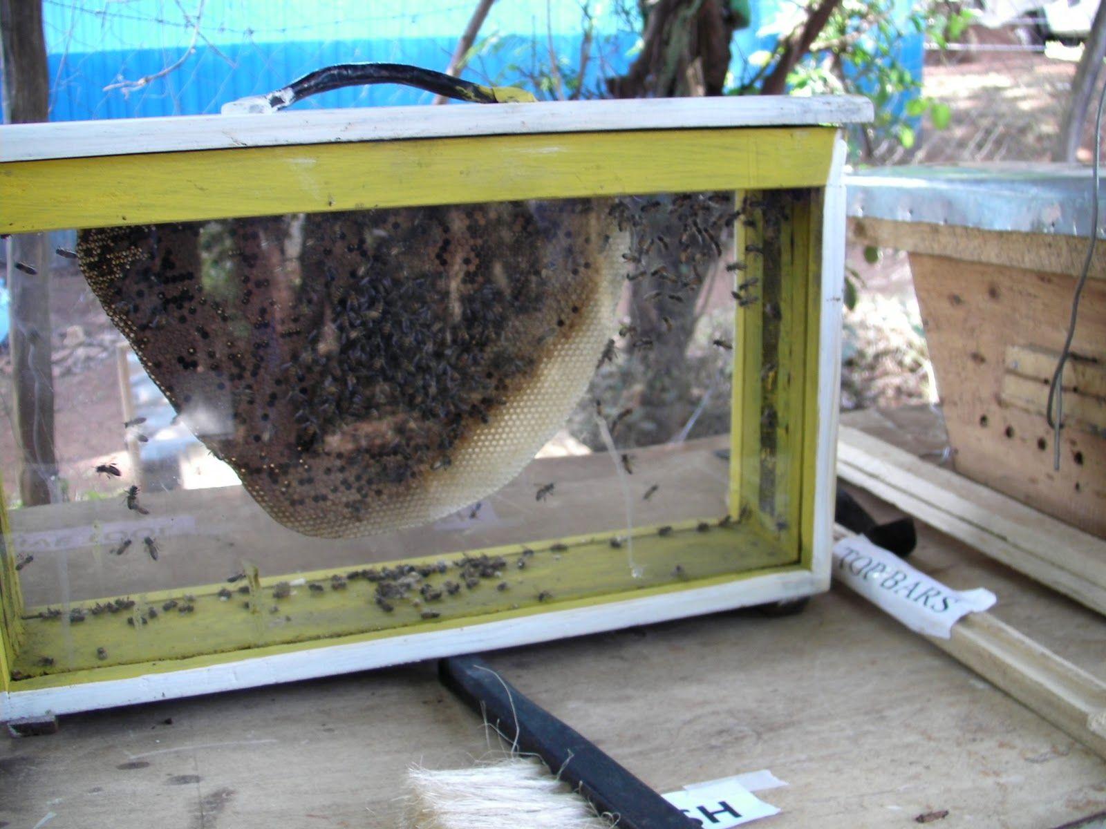 Marco moderno para colmena de abejas - Buscar con Google | granja ...