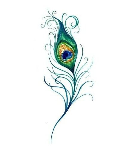 Peacock feather drawing tattoo - photo#34