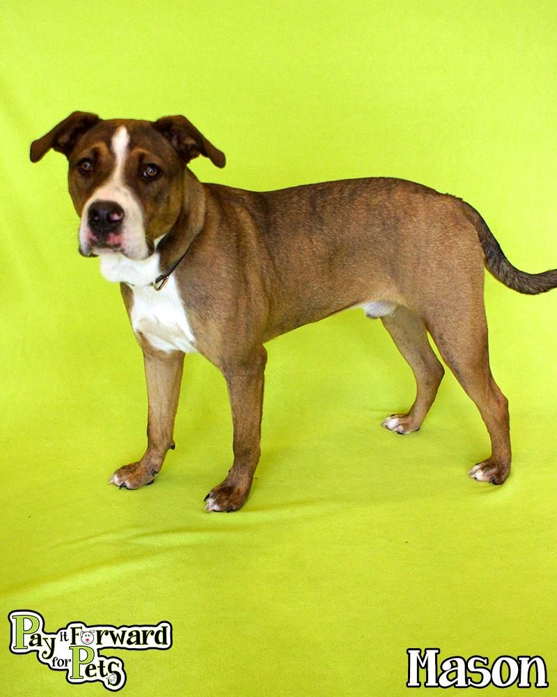 Adopt Mason On Adoption Animal Rescue Site Dog Cat