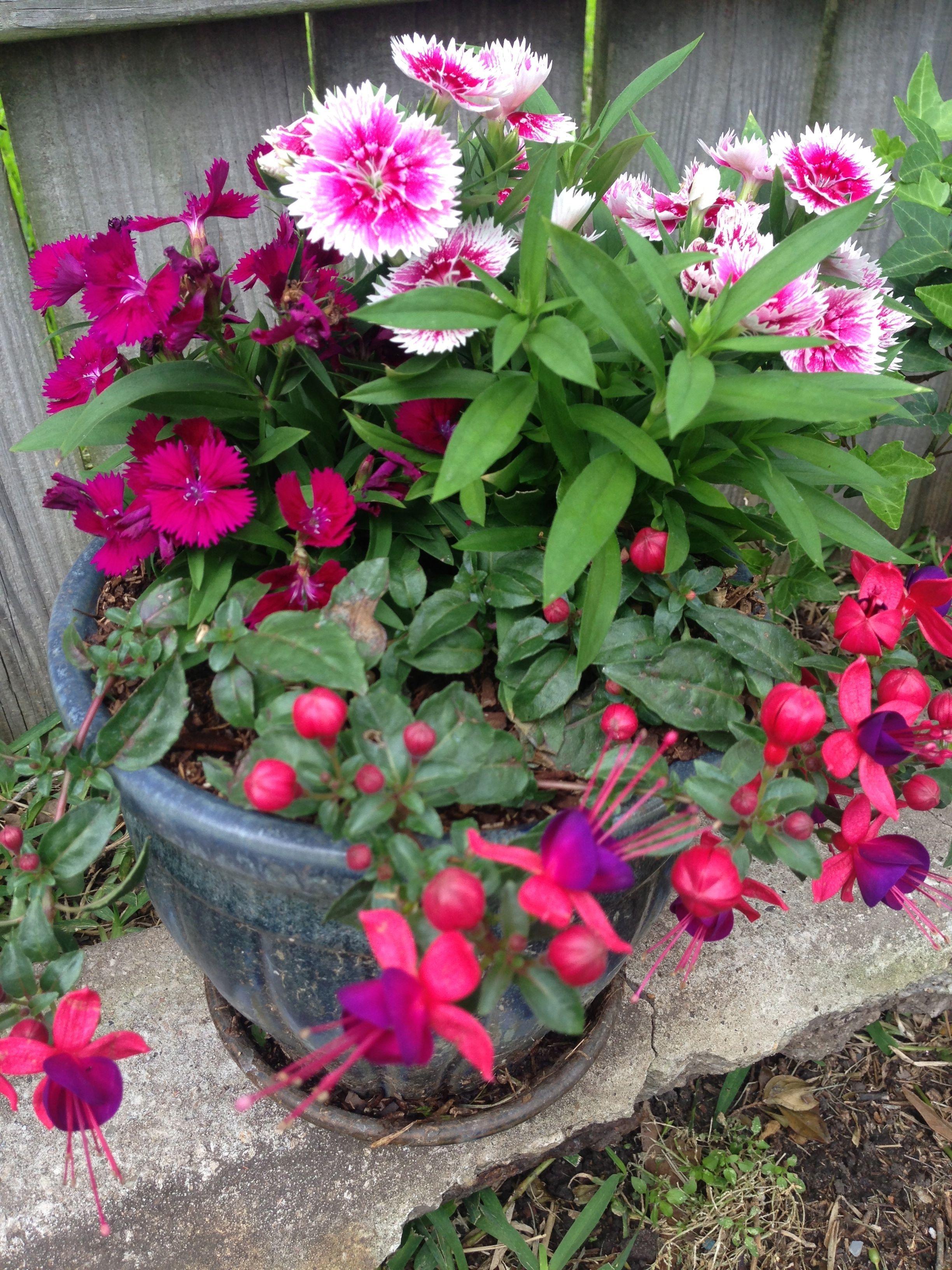 Pin By Kari Ruden On It S Not That Easy Being Green Container Flowers Backyard Garden Garden