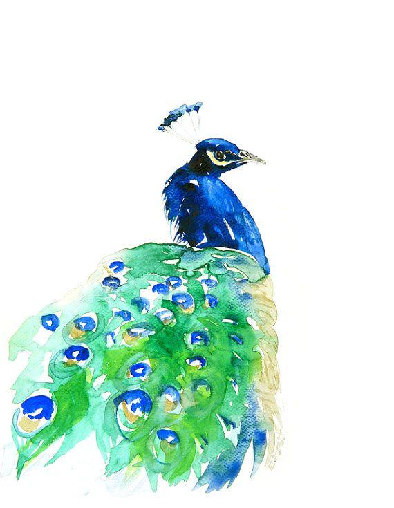 Peacock Watercolor @Alejandra Sacasa...I love peacocks ...