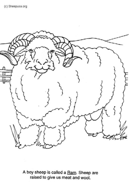 Coloring Page Ram Img 6014 Coloring Pages Free Printable