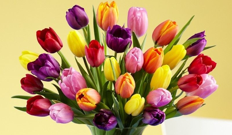 History And Meaning Of Tulips Proflowers Blog Flower Arrangements Tulip Bouquet Different Types Of Flowers