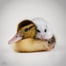 Awww snuggles!