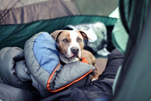 Creature camping