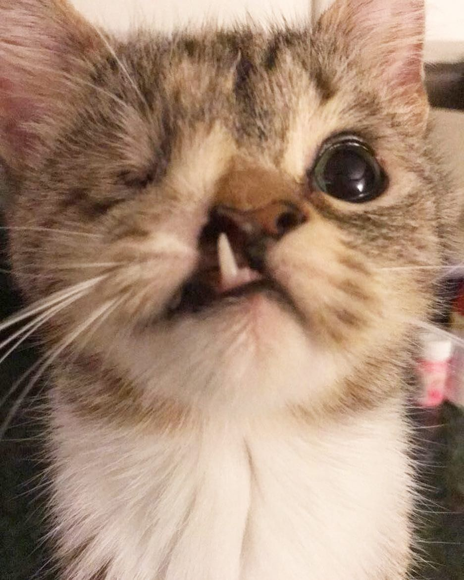Couple Gives One Eyed Kitten With Snaggletooth A Chance While Others Say It Isn T Worth It Love Meow Kitten Cute Animals Kittens Cutest