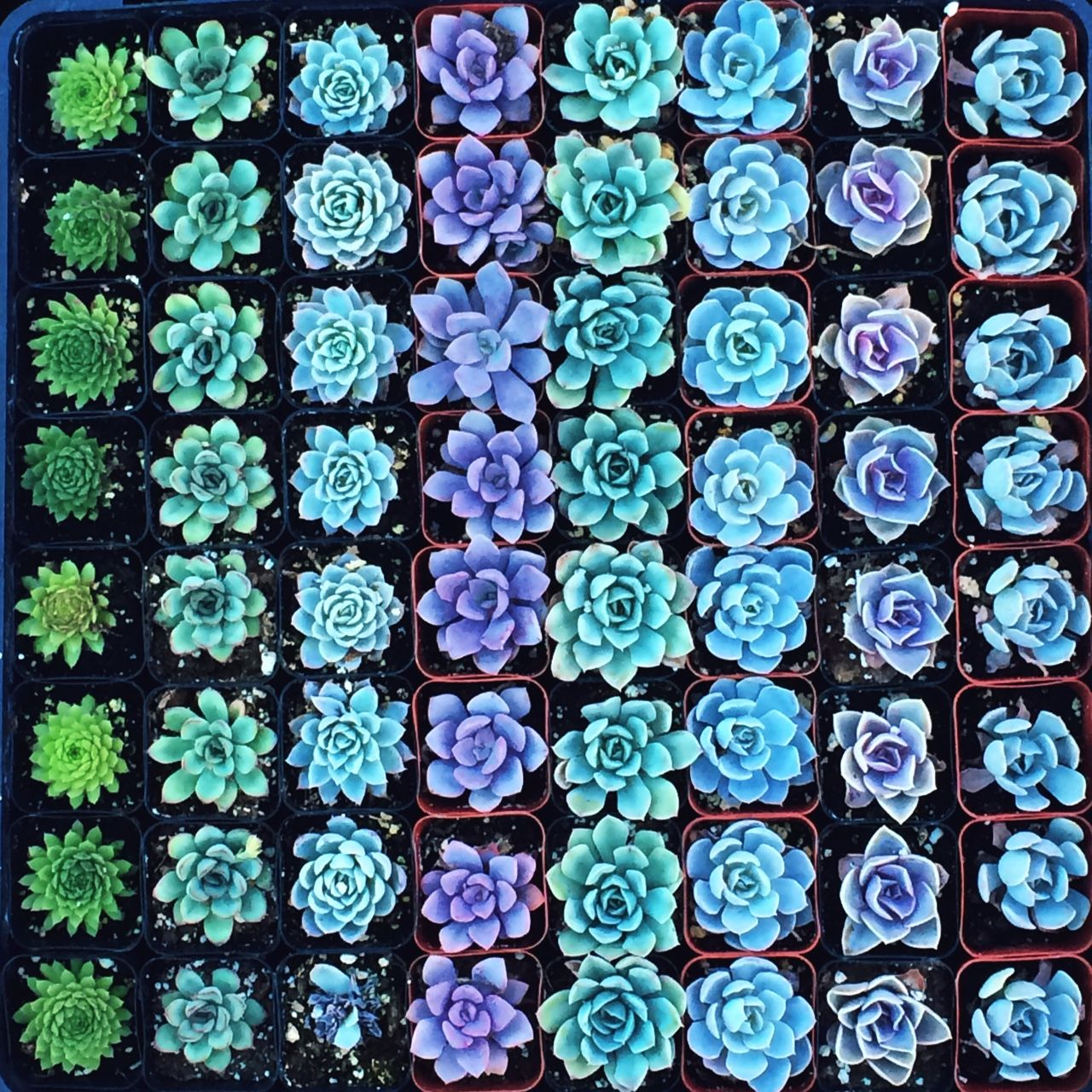 Go Some Place Where No One Knows Your Name Blue Succulents Succulents Plants