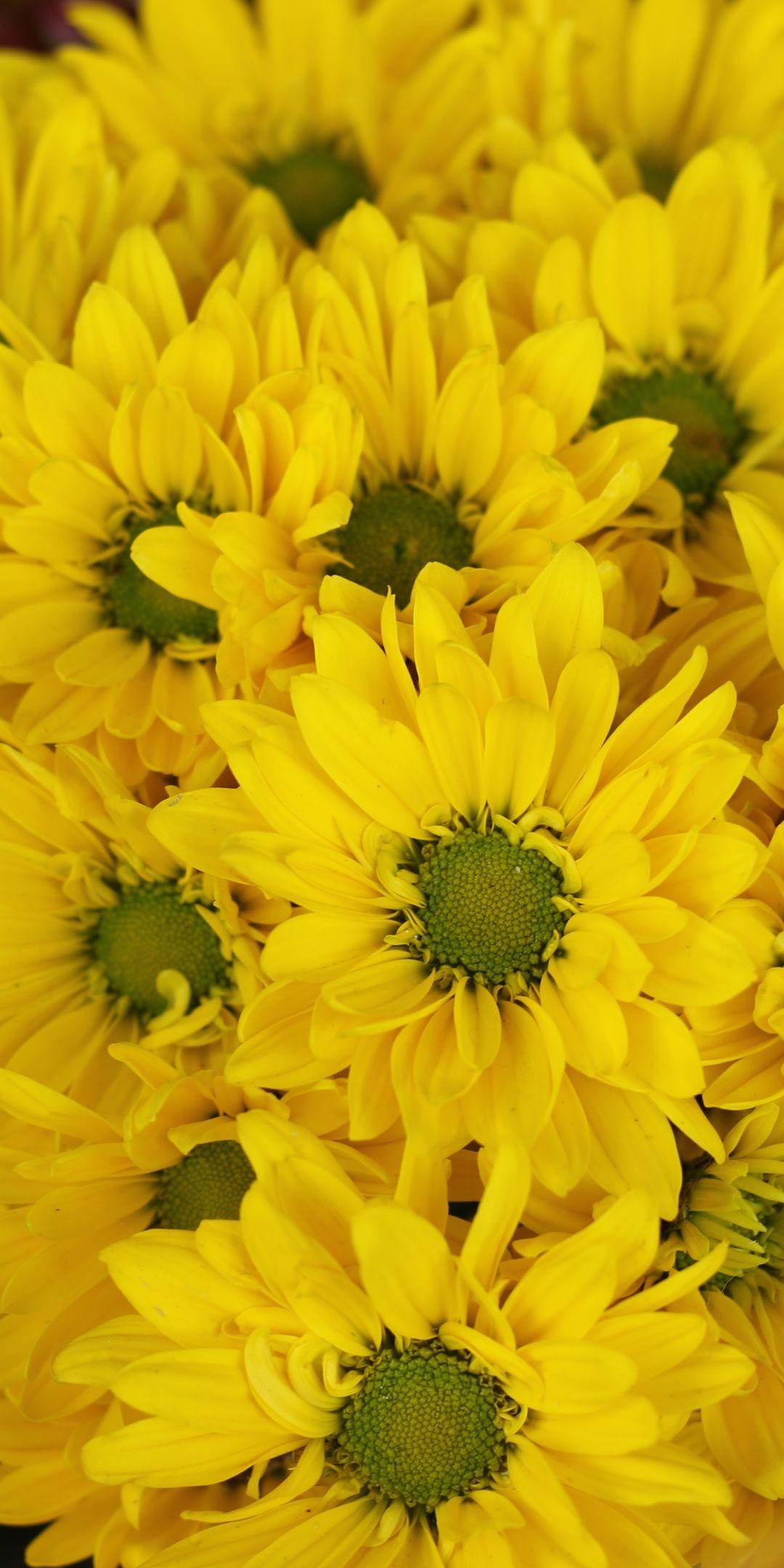 Yellow Flowers Gerbera Basket Bloom 1080x2160 Wallpaper Yellow Flower Wallpaper Yellow Flowers Yellow Wallpaper