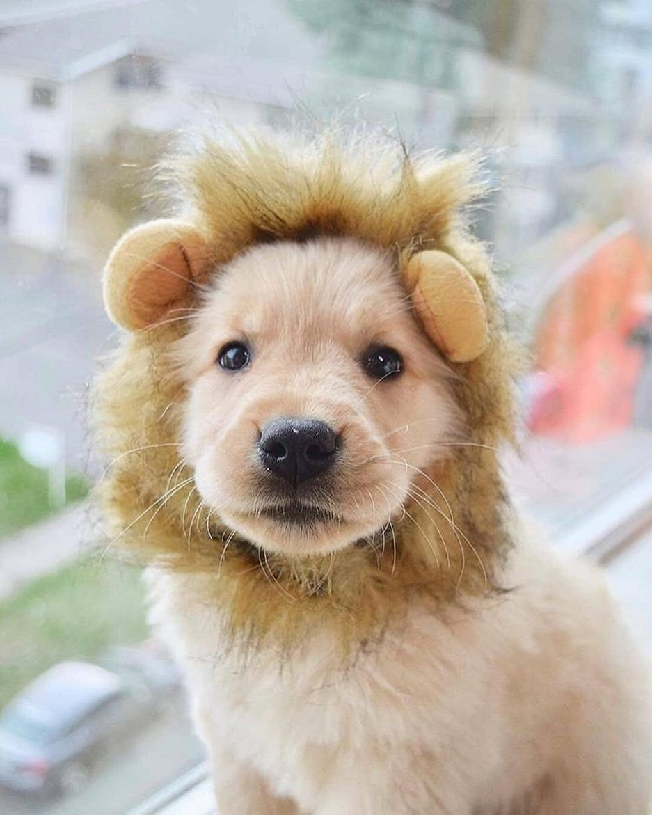 Doggy World On Instagram Baby Lion