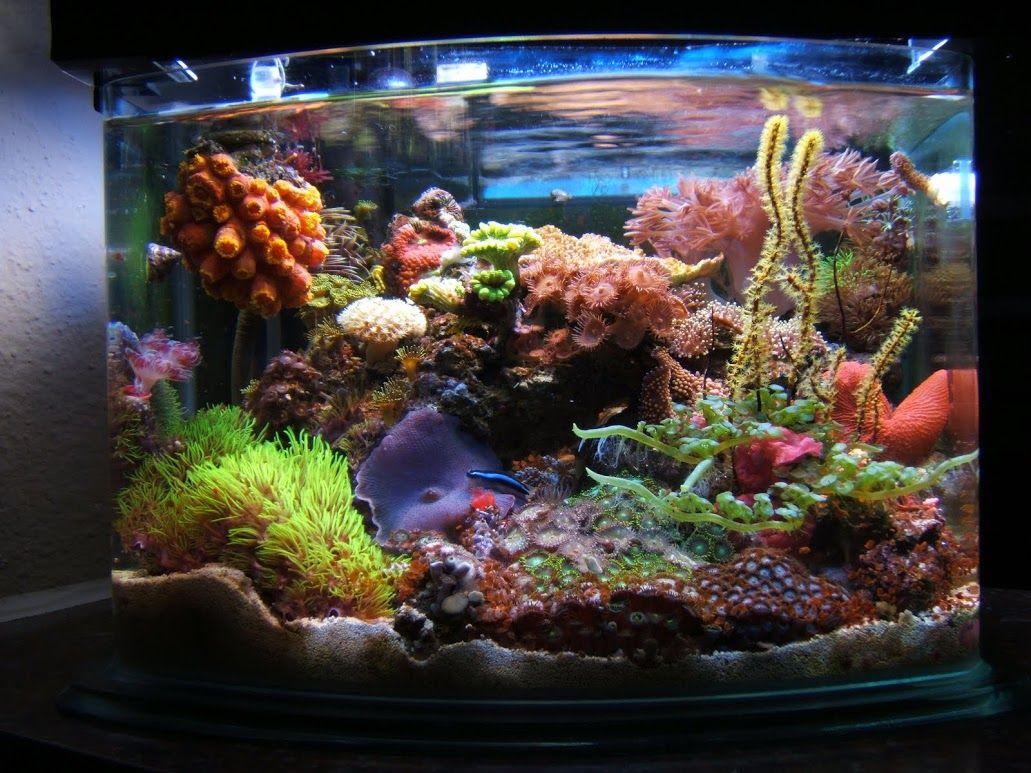My 3 gallon saltwater aquarium aquarium reef aquariums for Fish tank ice method