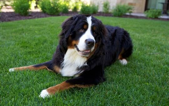 Hotel Pet Mascots You Ll Want To Travel The World To See With Images Dog Hotel Great Swiss Mountain Dog Pets