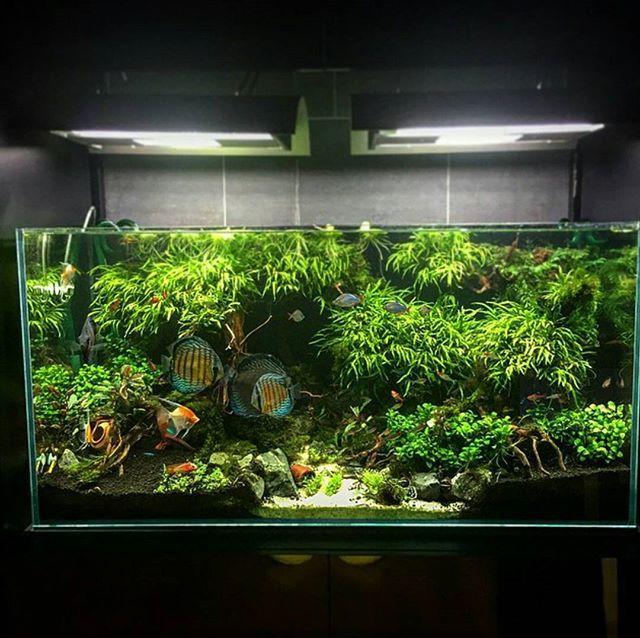 planted discus tank fish tank aquarium freshwater aquarium