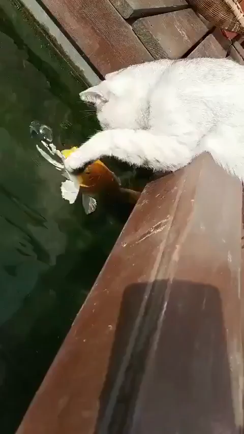 touch the fishies