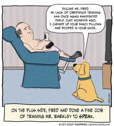 Dog Training Humor Funny Dogs Dog Training