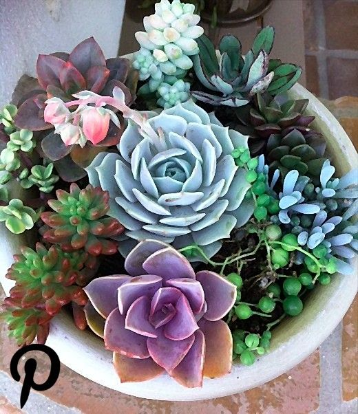 Succulent Plant  DIY Dish Garden Plants Perfect Create Your Own Centerpiece Succulent Plant  DIY Dish Garden Plants Perfect Create Your Own Centerpiece