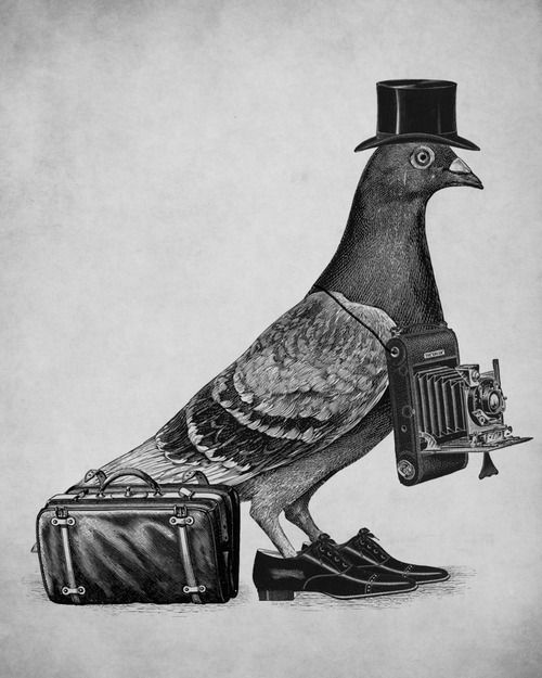 Photographer Pigeon from Classy Animals Who Wear Ties