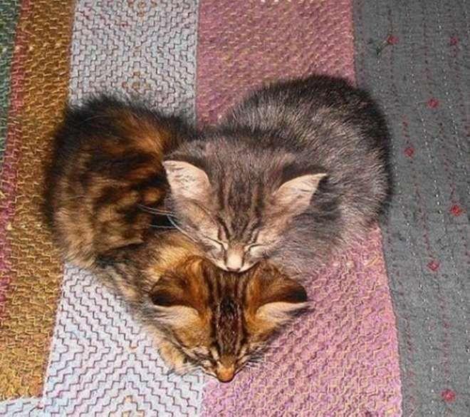 Mi corazón de gatitos