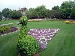 topiaryPeacock