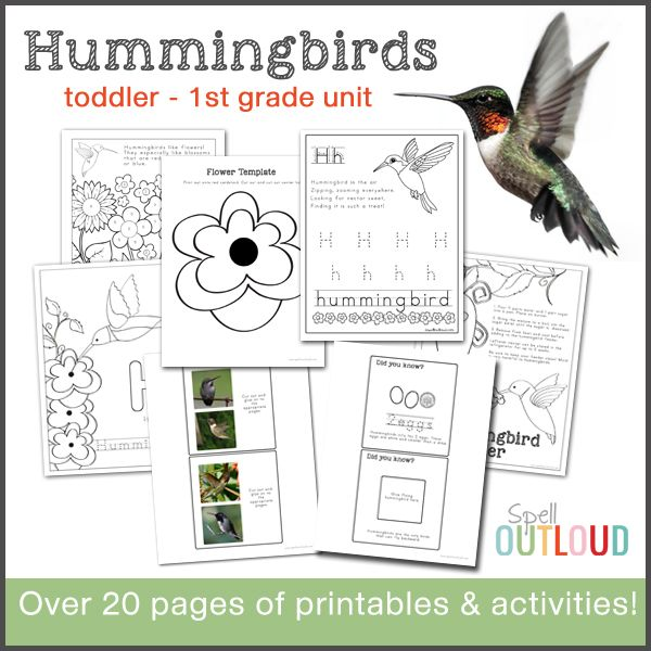 hummingbird nature study worksheets printables for pre. Black Bedroom Furniture Sets. Home Design Ideas