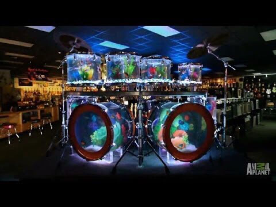 The drum set tank built by atm for blues angel music 39 s for Atm fish tank