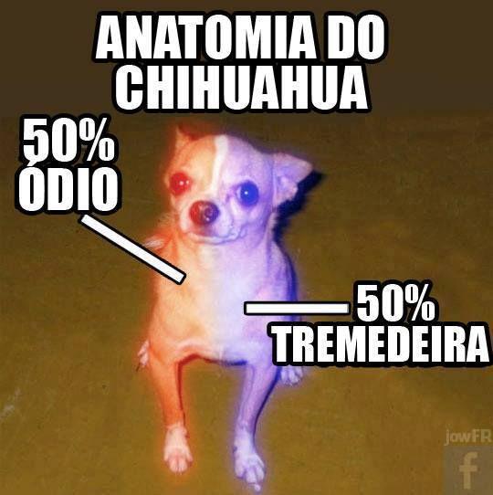 Anatomia do Chihuahua