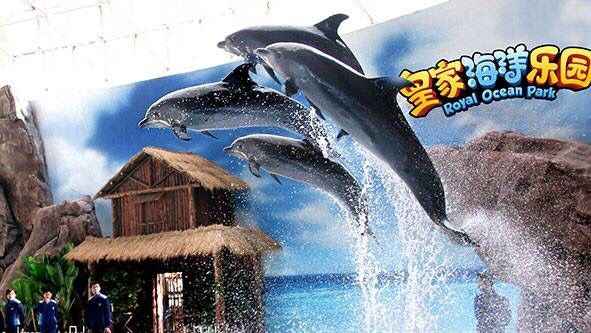 Awareness For Cetaceans — A group of four pacific bottlenose dolphins have...
