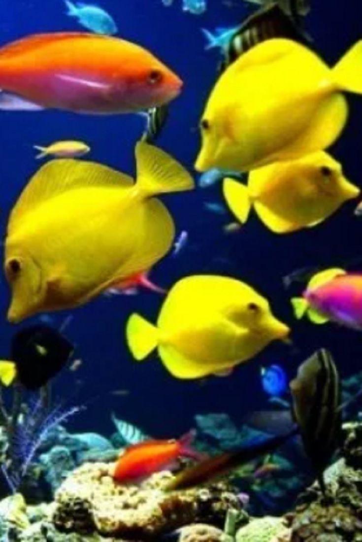 Tengeri akváriumi halak