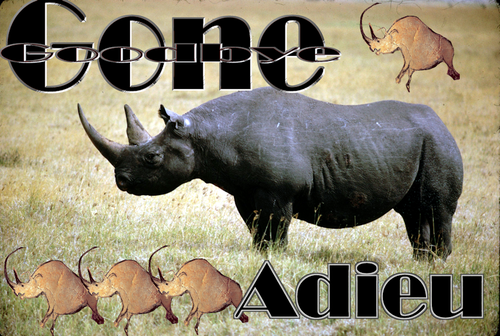 The Western Black Rhino has officially been declared