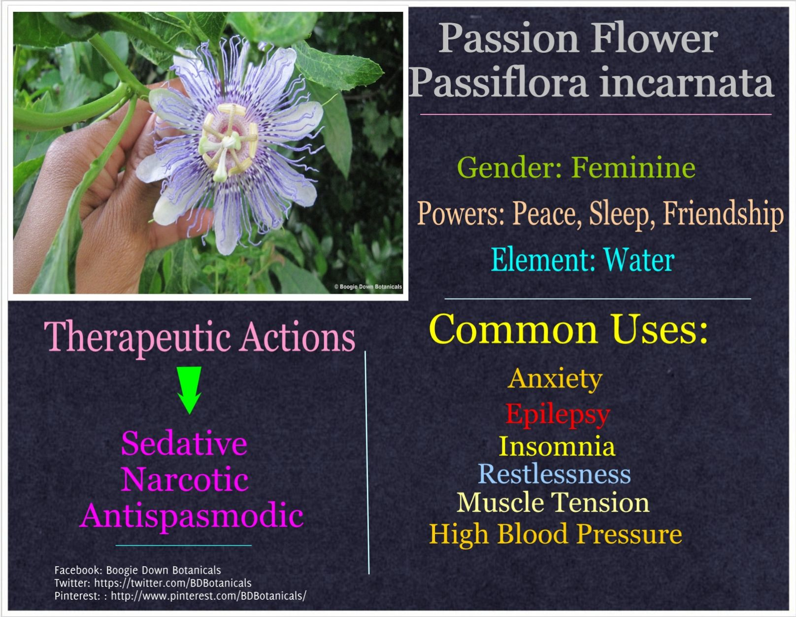 Passion Flower The Anti Stress Remedy For More Check Out Http On Fb Me 1dtc9kc Passion Flower Feminine Power Anti Stress