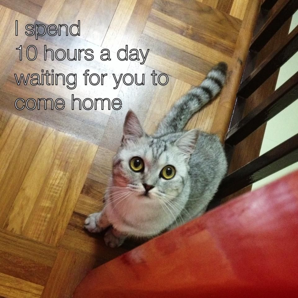 I Spend 10 Hours A Day Waiting For You To Come Home