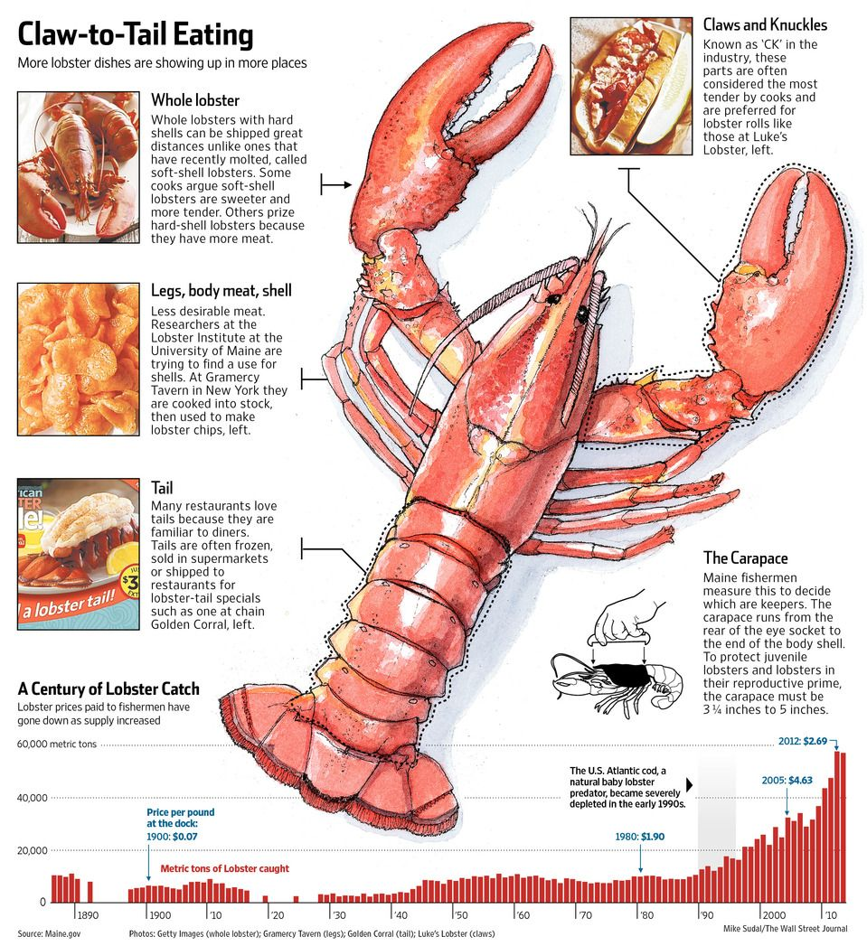 The True Fresh Maine Lobster Is A Cold Water Lobster Known Officially As American Lobster Cold Water Lob Cooking Roast Beef Lobster Dishes How To Cook Liver