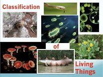 A high school biology teacher blogs about his science