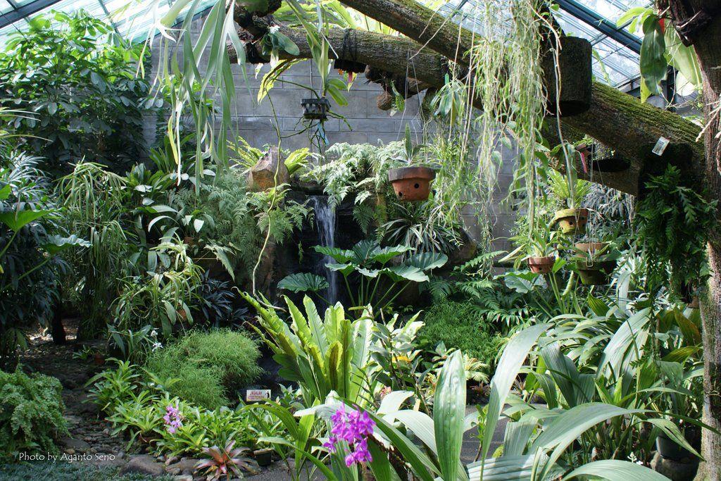 Inside Orchids house, Bogor Botanical Garden Orchid