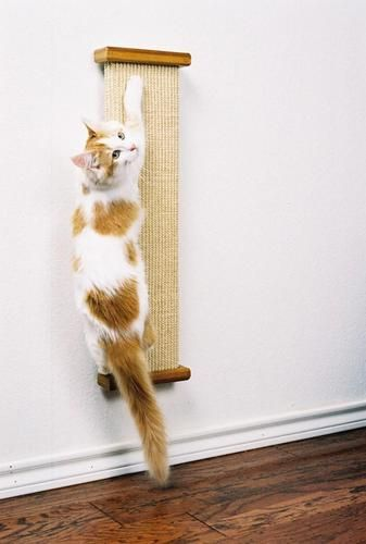 Image result for Bootsie's Combination Scratcher