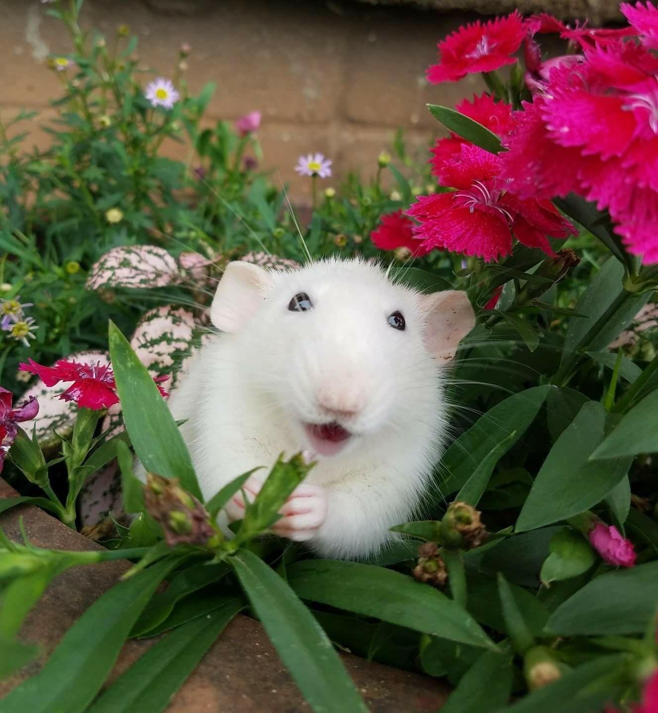 Happy, Happy, Happy in the plants:)