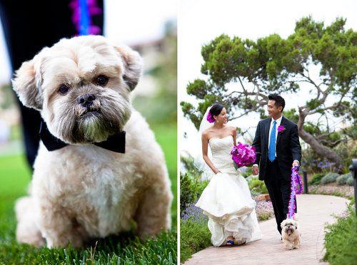 Trends We Love Puppies In Weddings