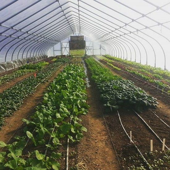 Creating Our First Vegetable Garden Advice Please: Winter Hoop House Harvest Schedule