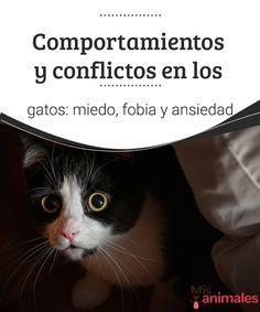 Comportamientos y conflictos en los gatos: miedo y fobia ¿Notas que tu felino ya no es el mismo? Aquí encontrarás todo lo que necesitas saber sobre los comportamientos y conflictos en los gatos. #comportamiento #conflictos #gatos #salud