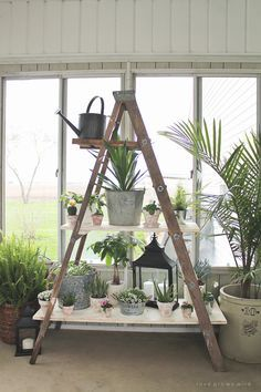 There Is Always Something Farmtastic Happening Over At Love Grows Wild And  This Antique Ladder Shelving Is Certainly Is Something Special!