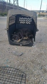 Animal Control Plans To Euthanize Frightened Dog That Was Dumped Near Rescue Animals Dogs Animal Abuse
